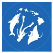 ハワイでイルカ & ウミガメとシュノーケル! 私立イルカ中学/名門イルカ大学